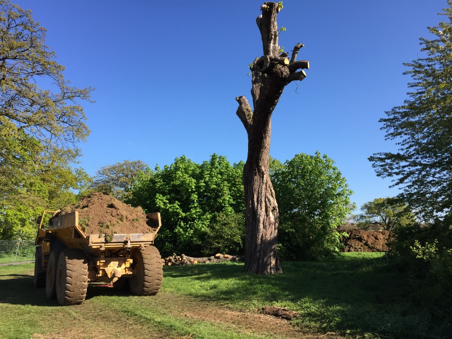 Machinery tracking routes were pre-planned to avoid damaging the root structures of any protected trees, such as this one