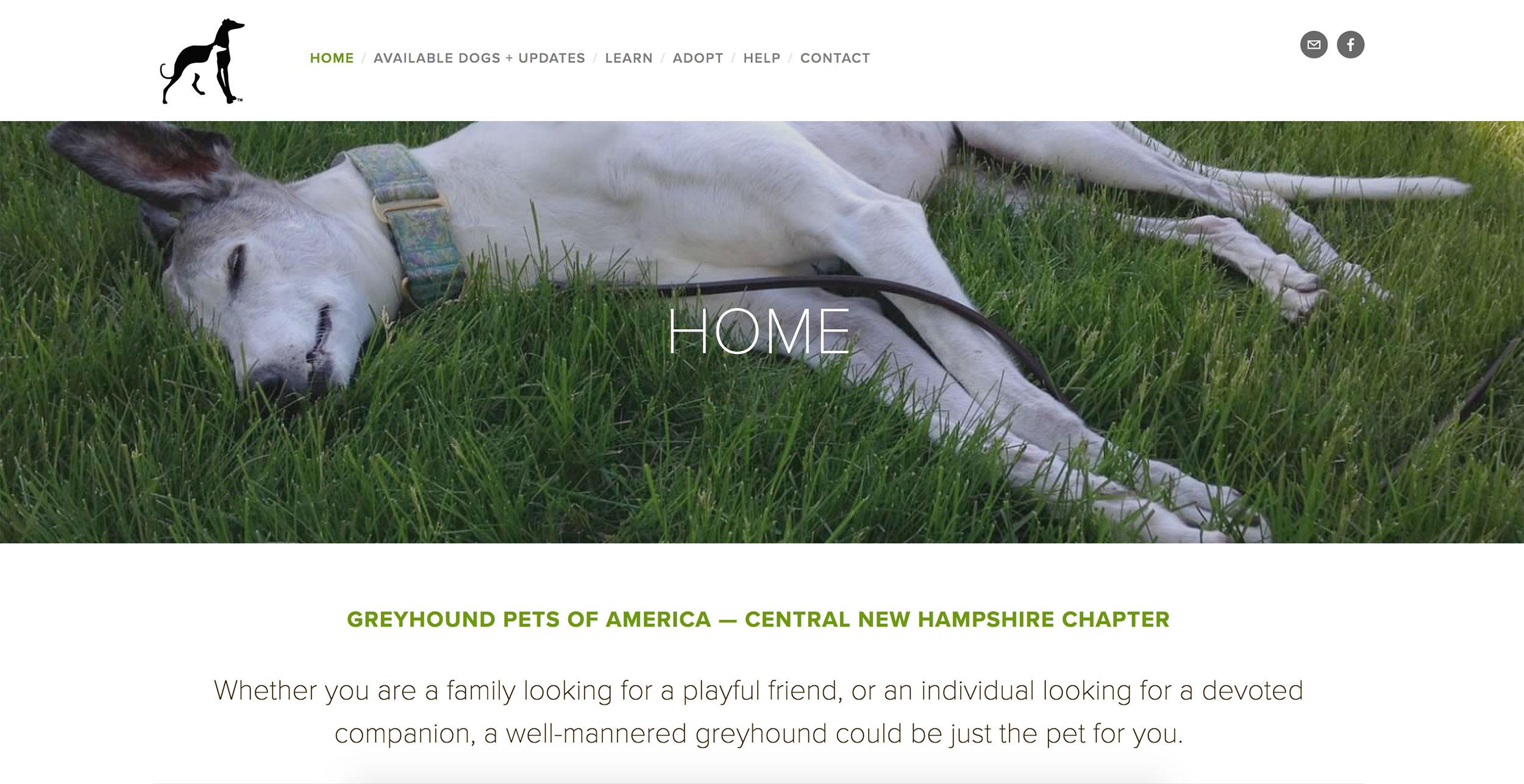 Greyhound Adoption