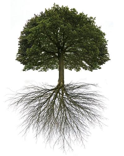 5-Amazing-Trees.jpg