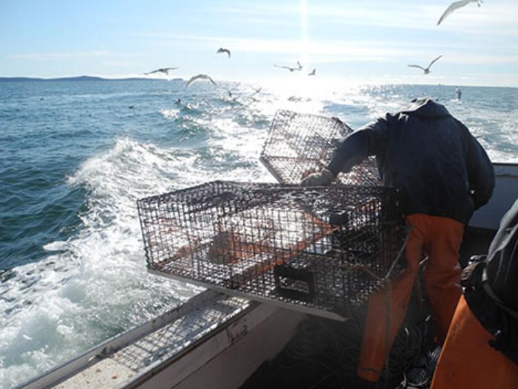 Wild-Caught-Maine-Lobster.jpg