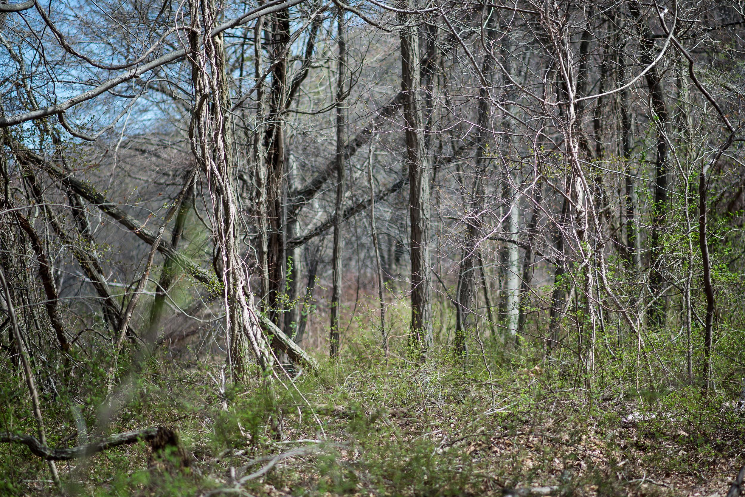 Spring Tangle.jpg