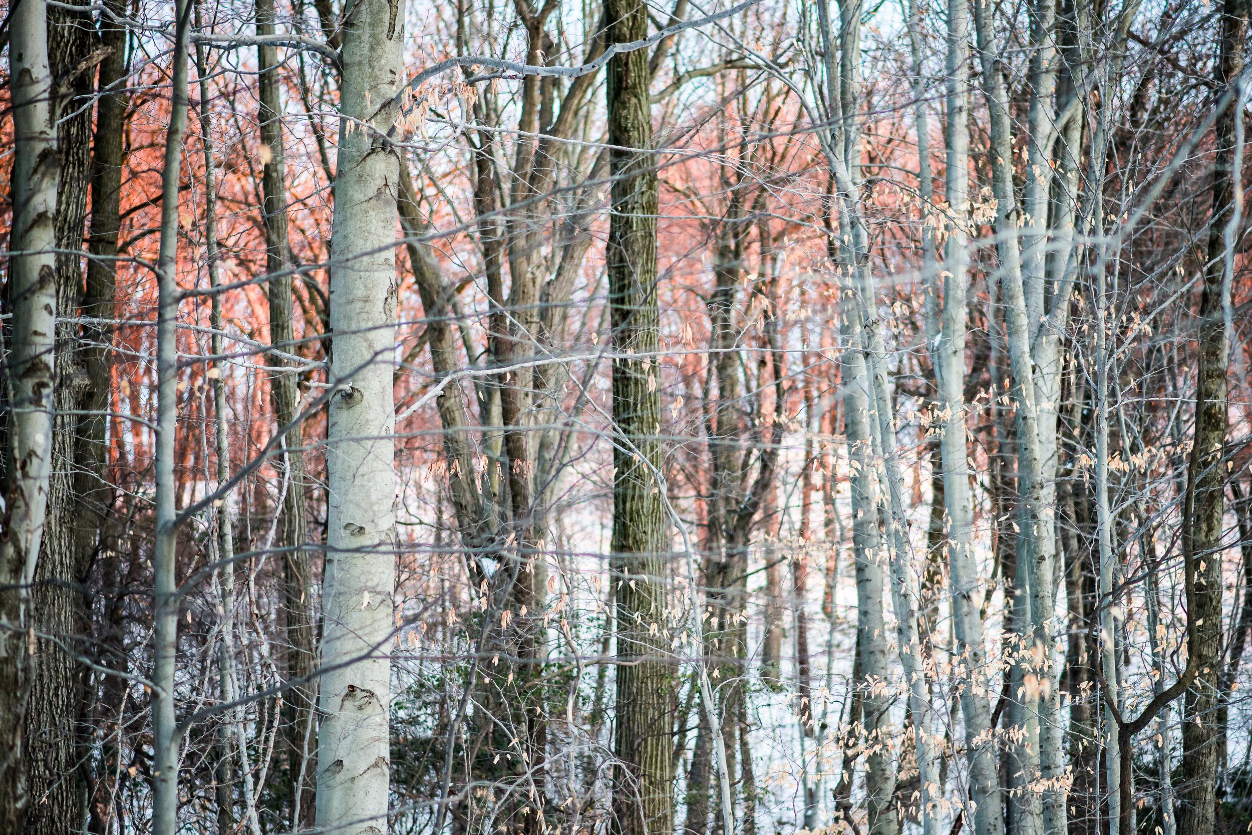 Salmon Woods.jpg