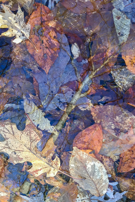 Spring Leaf Pond.jpg