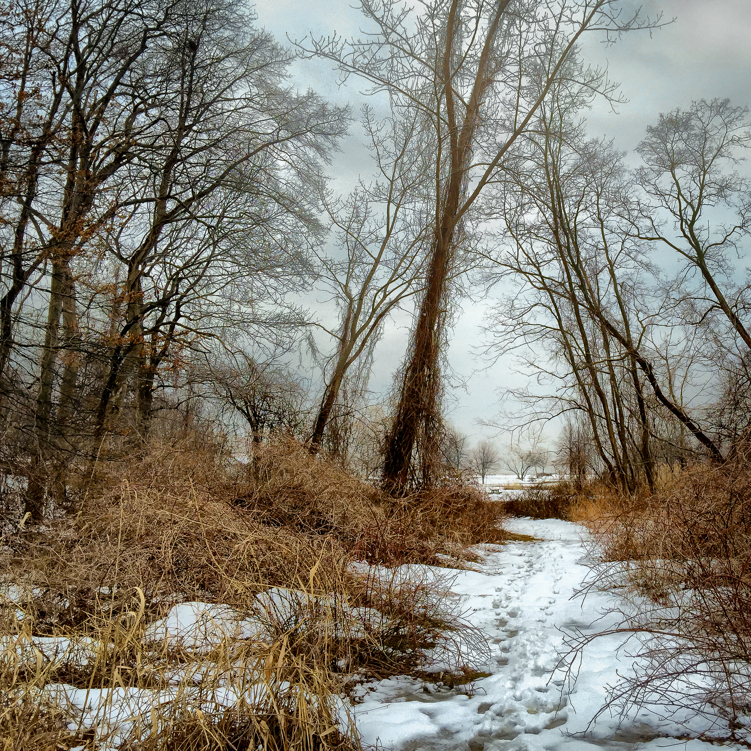 Marshy Woods Path.jpg