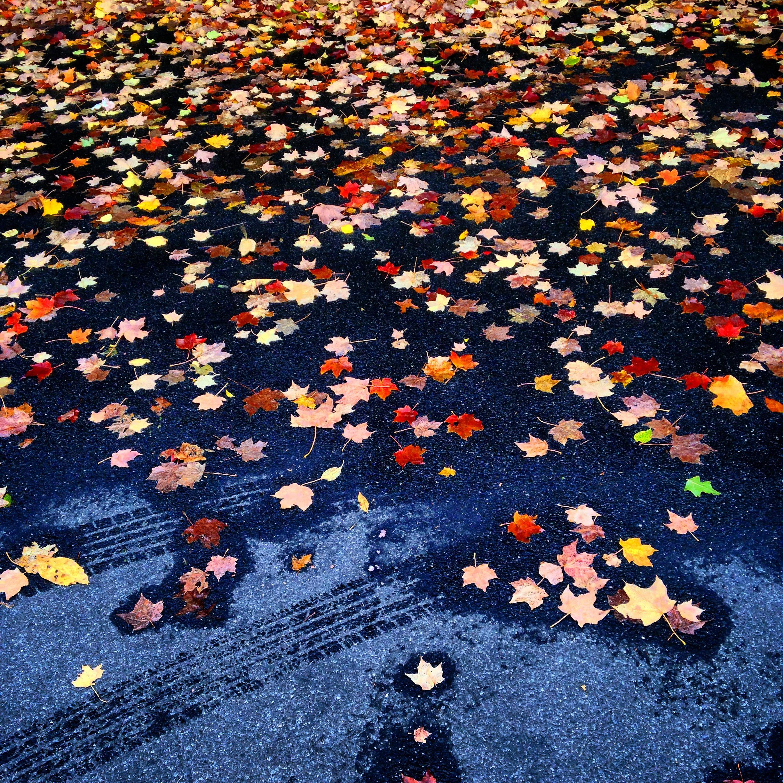 Leaves on Pavement-1.jpg