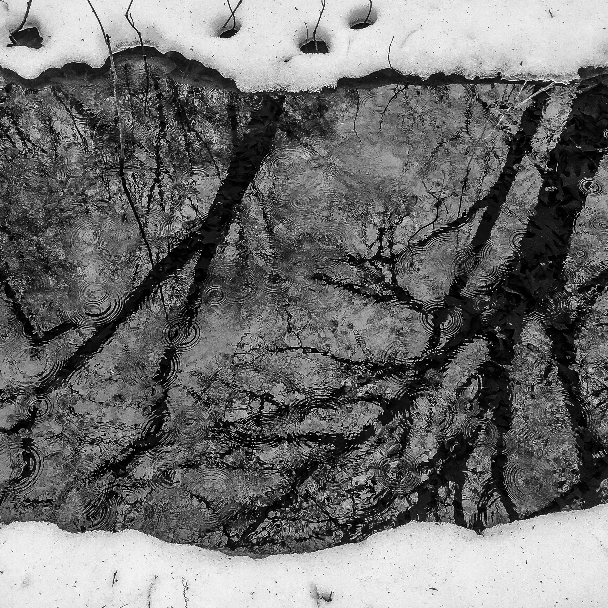 Rain on Bare Branched Reflection-1.jpg