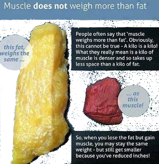 fatvsmuscle.png