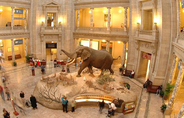 Smithsonian museum-natural-history-1.jpg