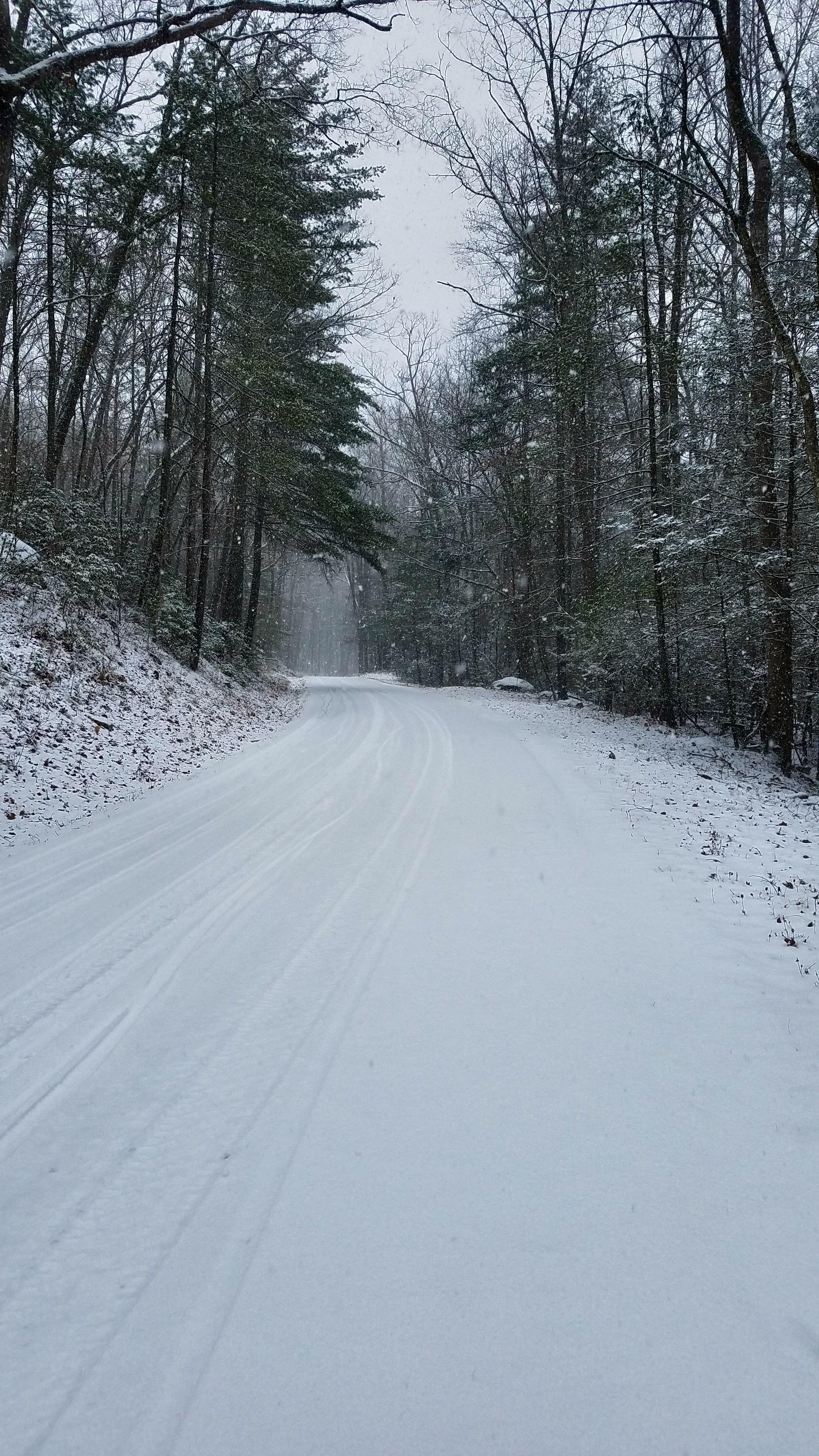Snowy tree tunnel