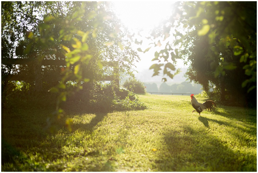 View More: http://urbanrowphoto.pass.us/rixey-manor