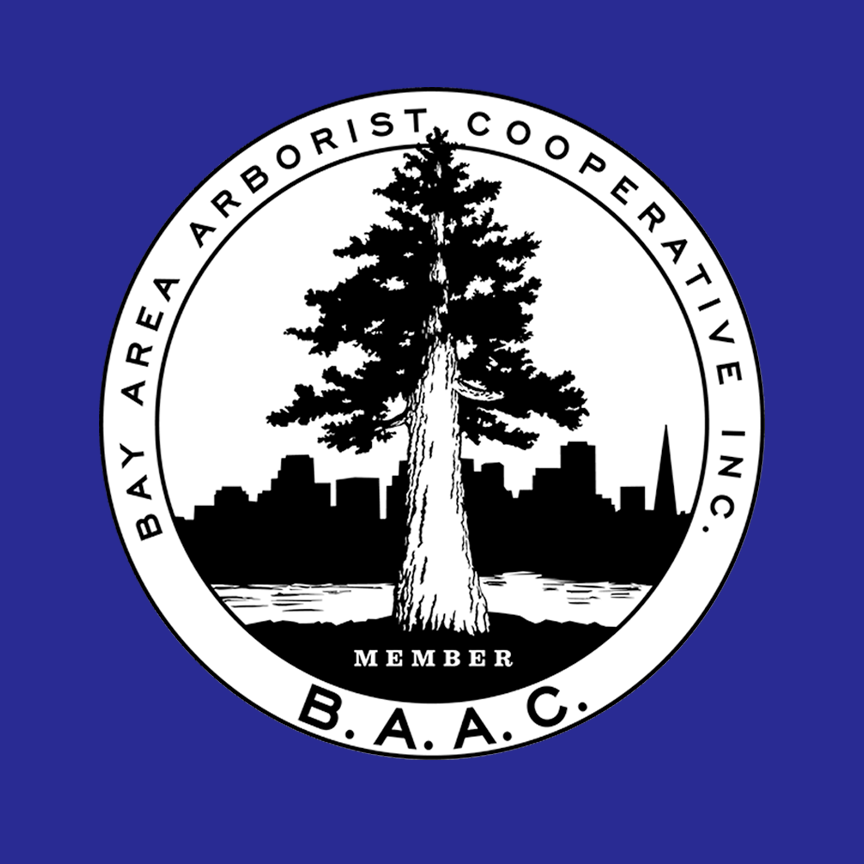 Bay Area Arborist Cooperative (BAAC) - Heart's Eye created a new responsive and SEO optimized site for this cooperative of 13 arborists. We worked with the cooperators to rebrand the organization with a new logo, and created and managed Google Adwords CPC advertising. Job inquiries increased by 1000% in the first four months after the website went live, and continue to be robust.