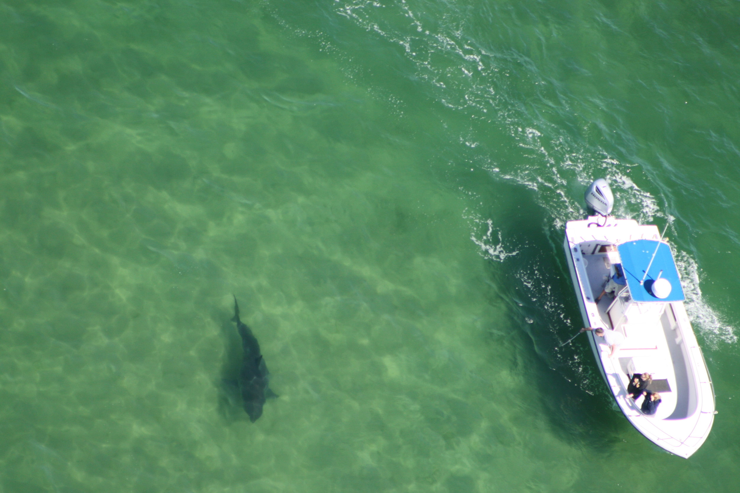 """""""Ryesing Son"""" on a 14' Great White in Chatham taken by our pilot George Breen."""