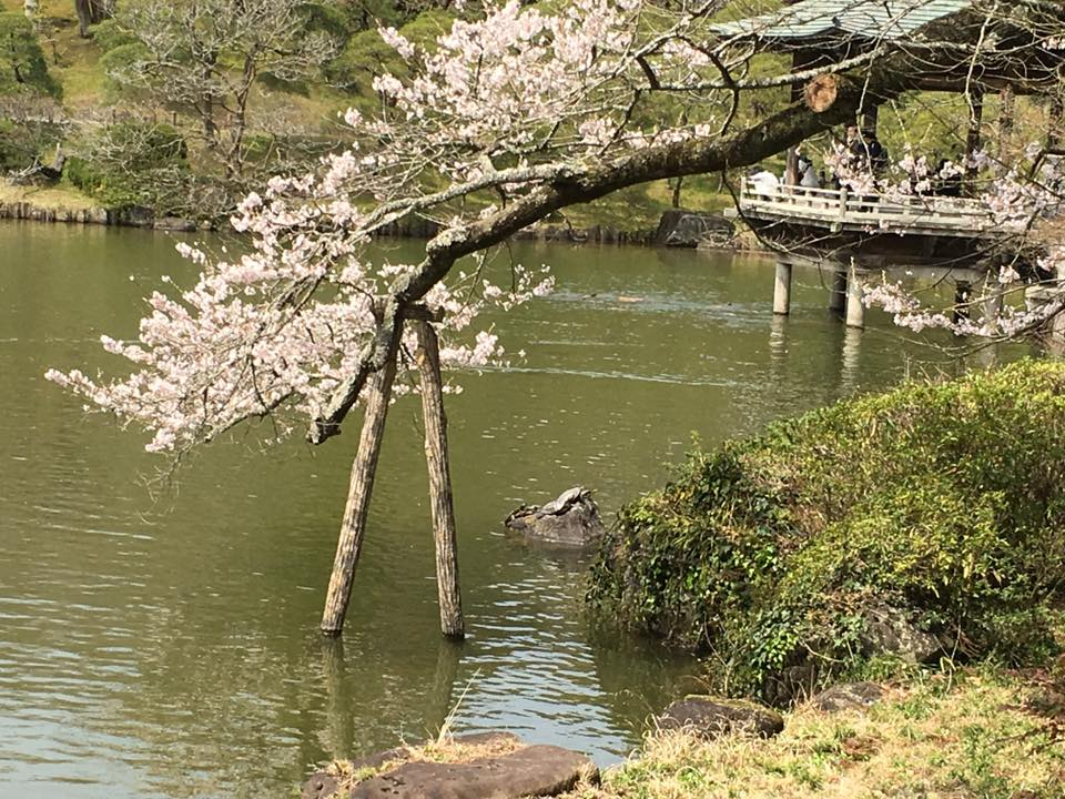 For this tree to be it's most beautiful self it needs a little help to stand. The tree isn't sorry. The stand isn't burdened. They work together in harmony. Let's work together to help you find harmony. (Narita Japan - Copyright 2016 - Molly Sumridge)