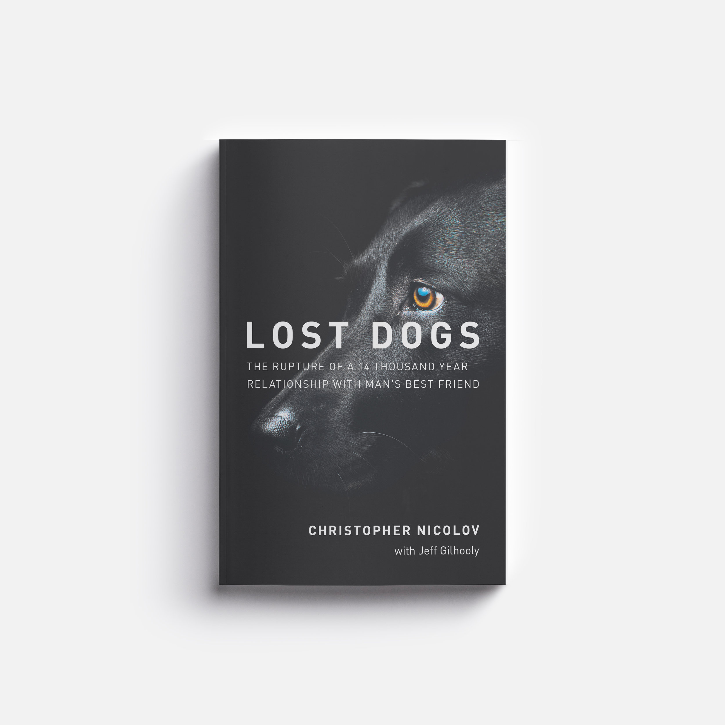 LostDogs_DahliaYuen.jpg