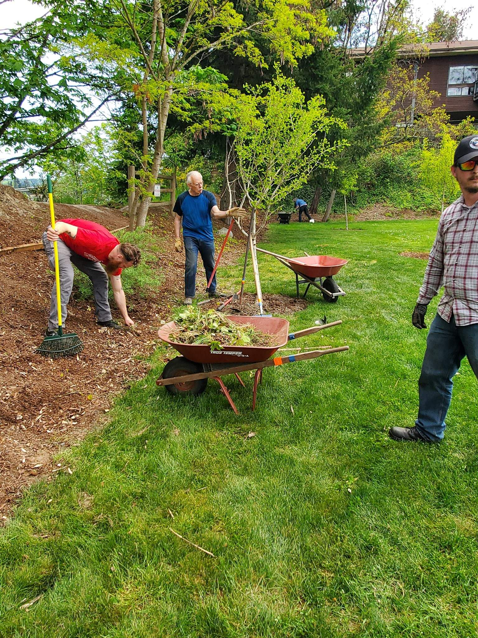 Volunteers clear the bark of weeds and other brush