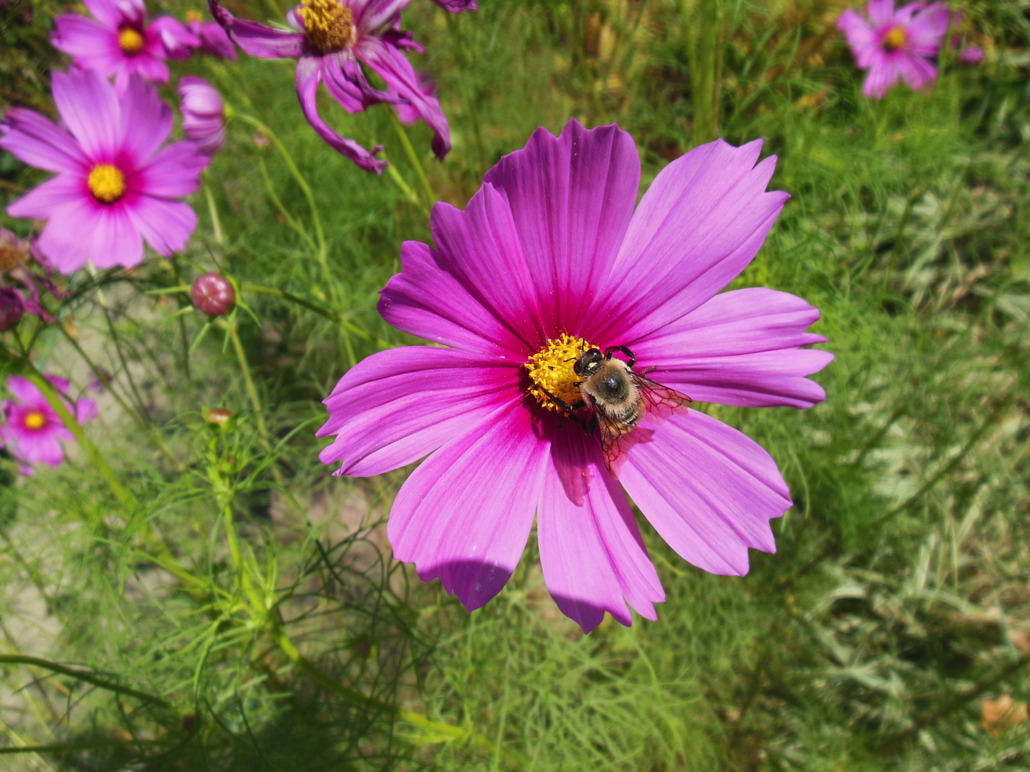 flower and bee.jpg