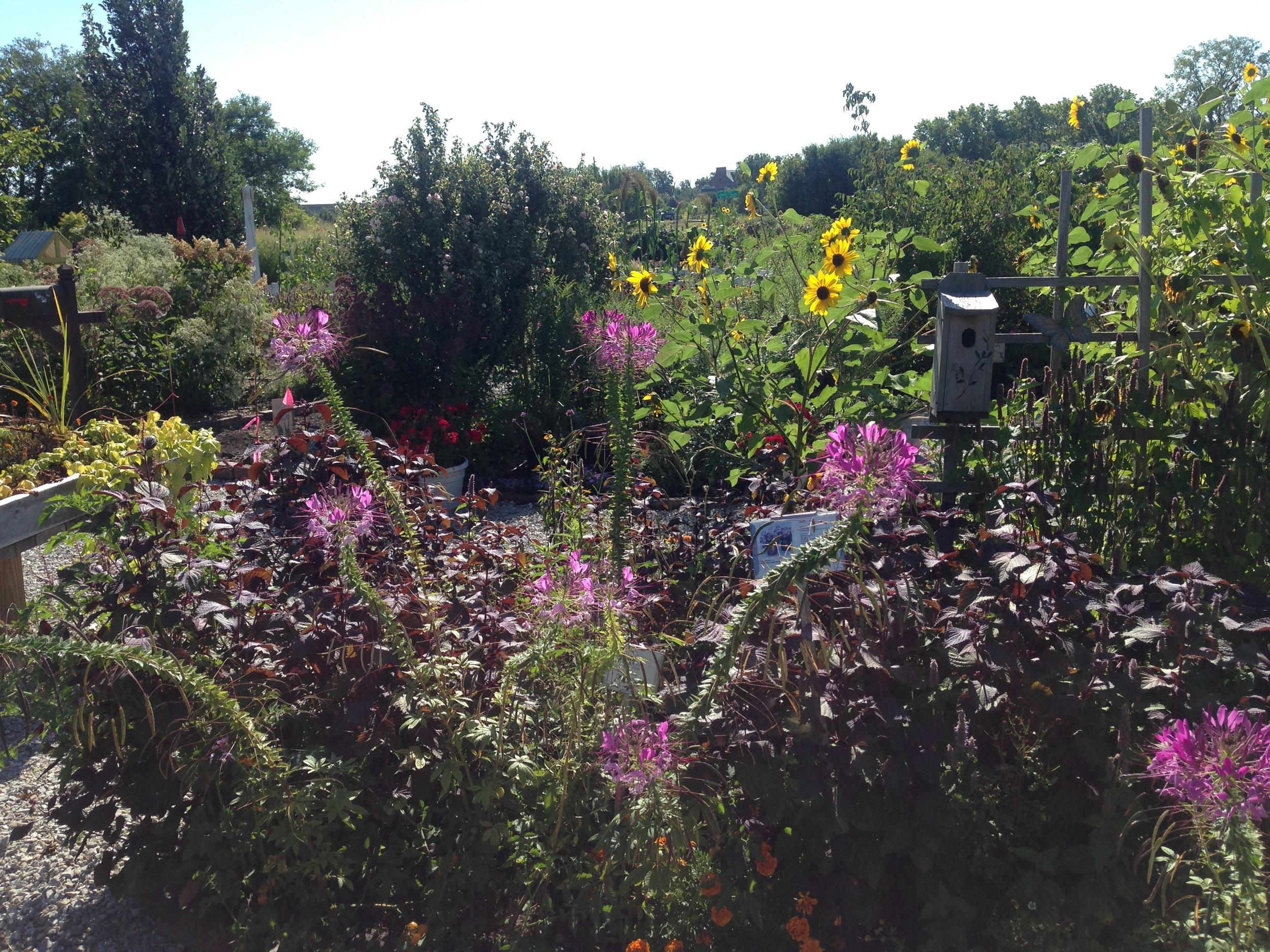 display garden flowers.jpg