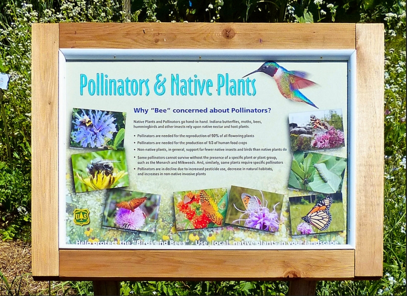 pollinators.jpeg
