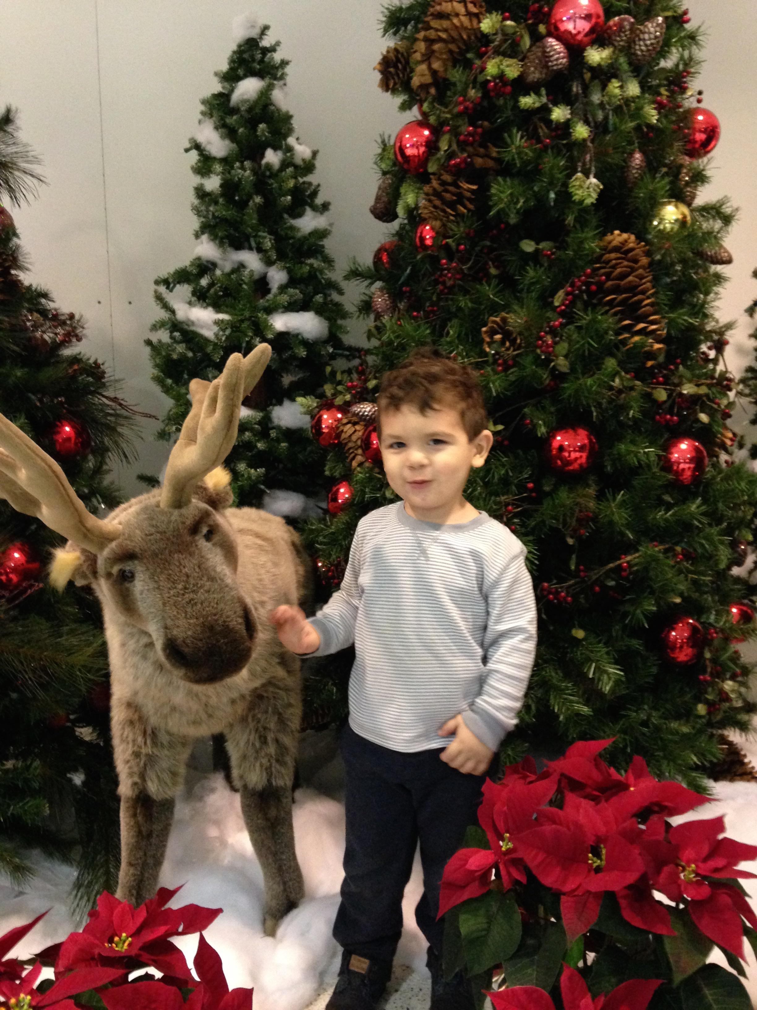 In the winter some airports have reindeer!  @CLE