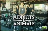 AddictsAndAnimals_187x120.jpg
