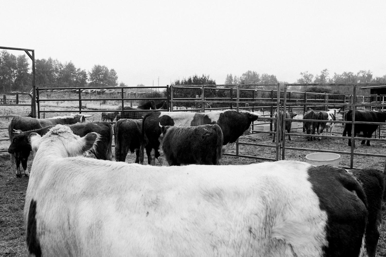 rodeo-family-in-alaska_18.jpg