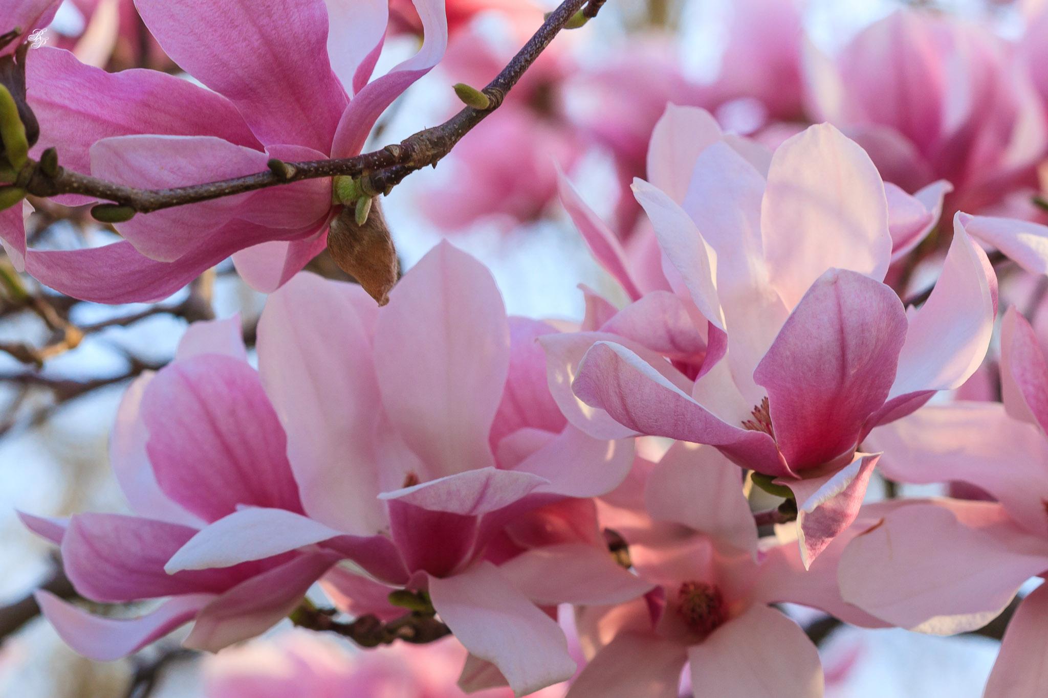 rpop-2007-03-26511.jpg