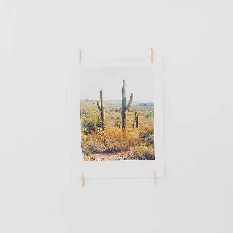 9_AZ_cactus_ETR0273.jpg