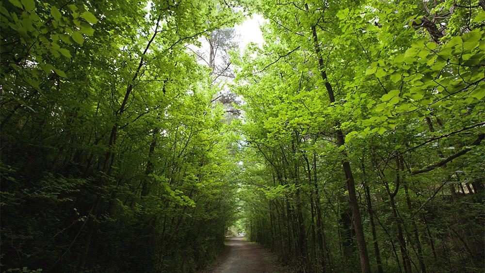 Jungle Trail / 35mm