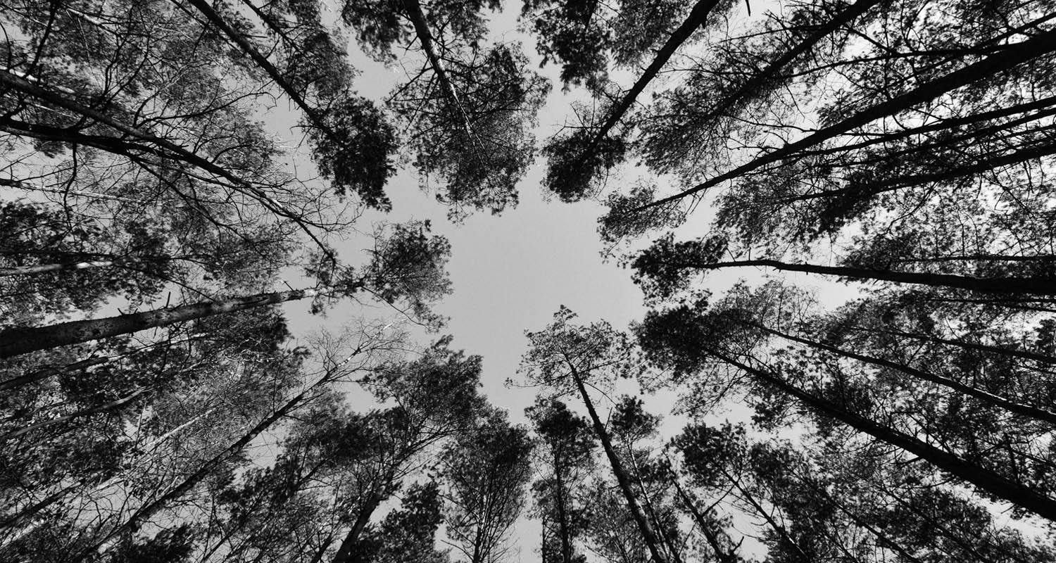 forests-sky-foliage-from-the-bottom.jpg