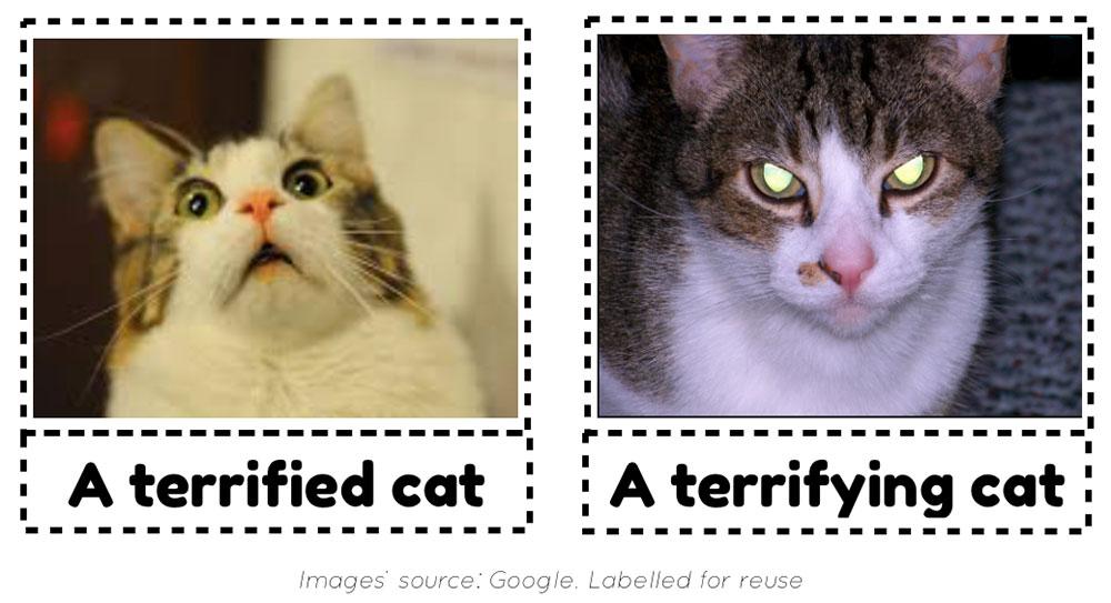 A terrified cat versus a terrifying cat