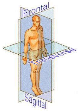Anatomical Planes of Motion