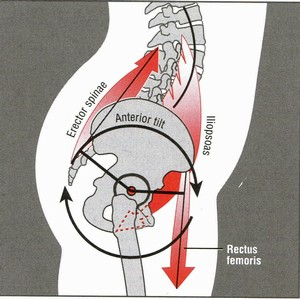 Hamstrings pull the pelvis posteriorly or down and backwards.