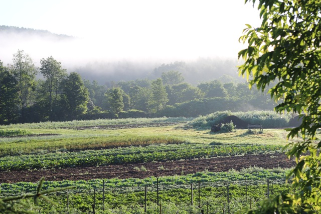Looking north across the market garden. Photo by Jenna Rice.