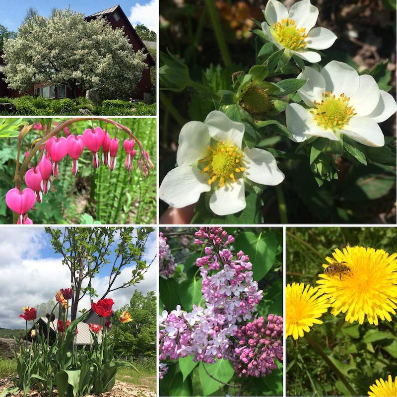 Blooms collage.jpg