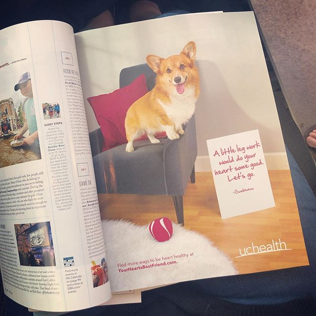 Gumbeaux always knew he was famous, now he has proof! Spot him in this months @5280magazine for @uchealth. Just love him so damn much. #corgi #gumbeaux