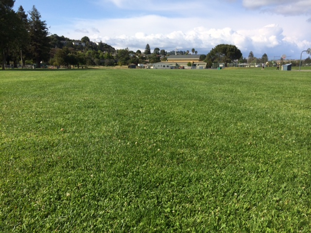 The pitch at Corte Madera Town Park for the tournament