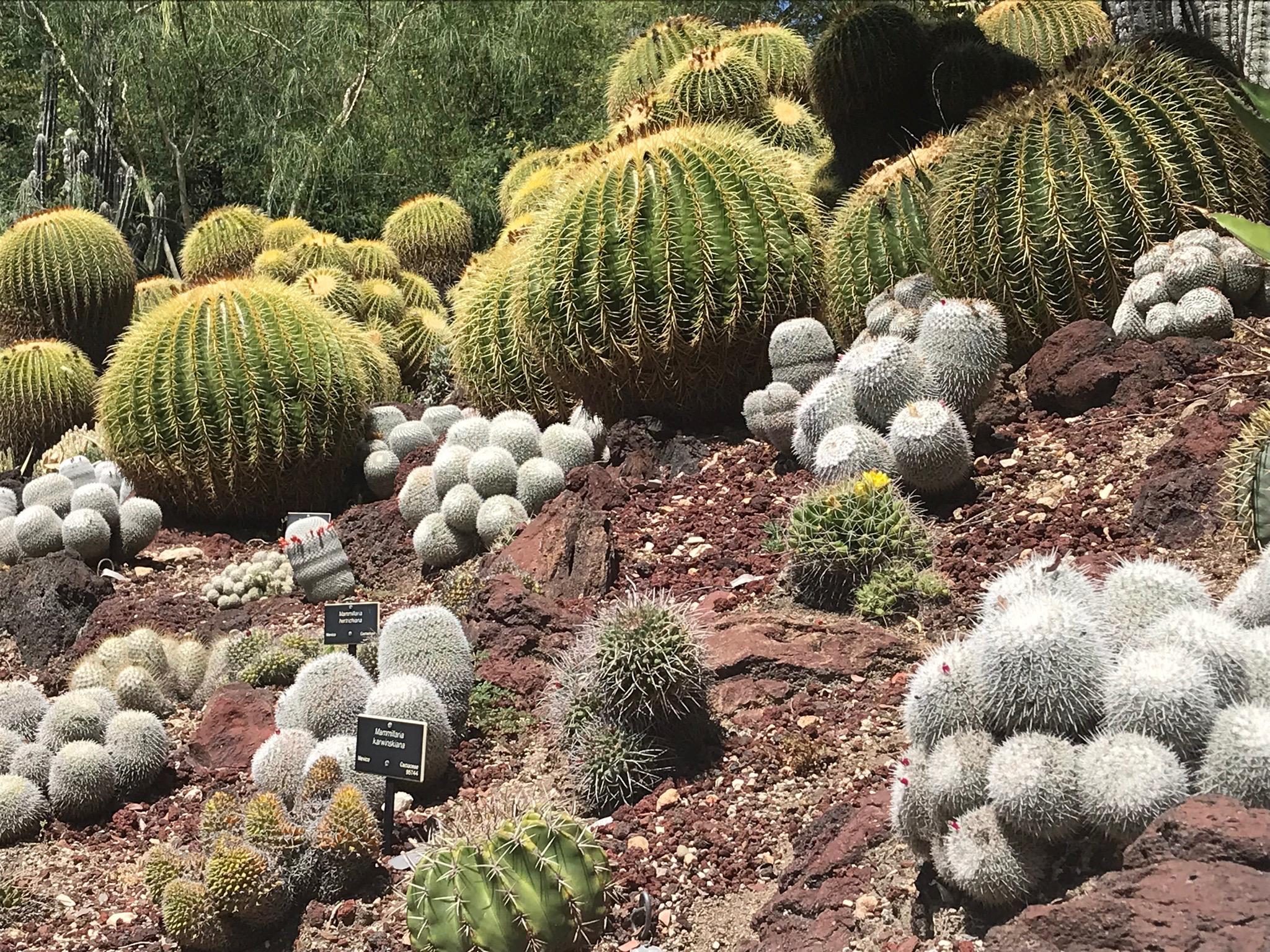 Pasadena CA Botanical Garden
