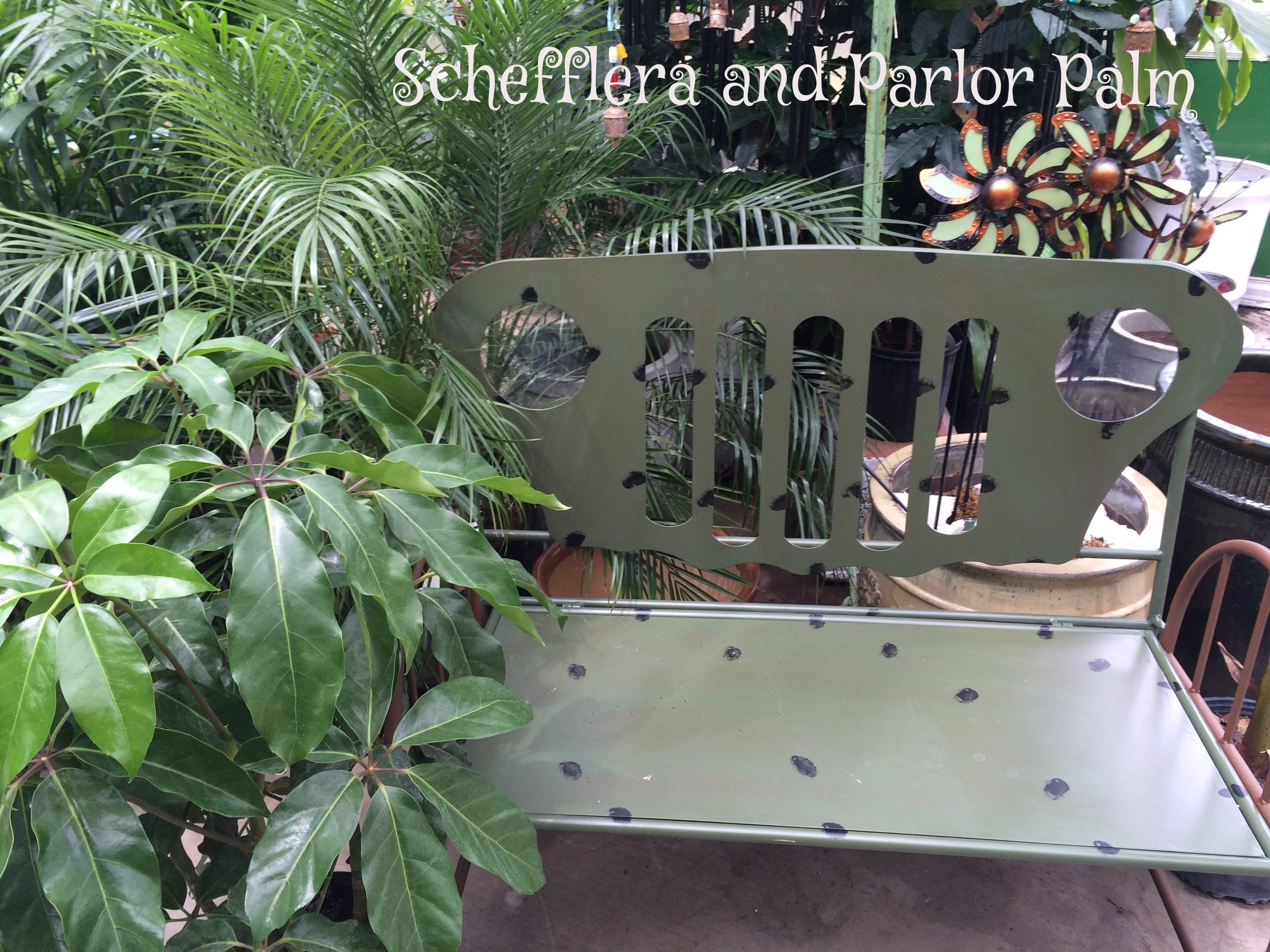Parlor Palm and Schefflera