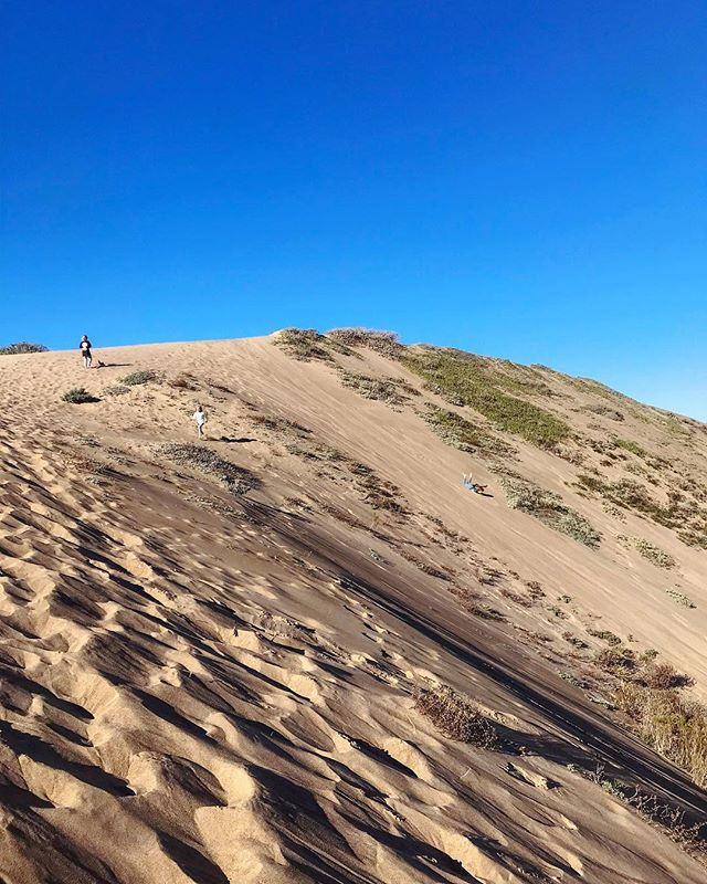 I couldn't let the week pass without taking my niece and nephew to the sand dunes. The adults were content going up and down the sand dune only once, while the kids amazed me with their stamina. Sliding down, rolling down, running down...over and over. And they still stayed up fairly late tonight. Oh to have that kind of energy again.