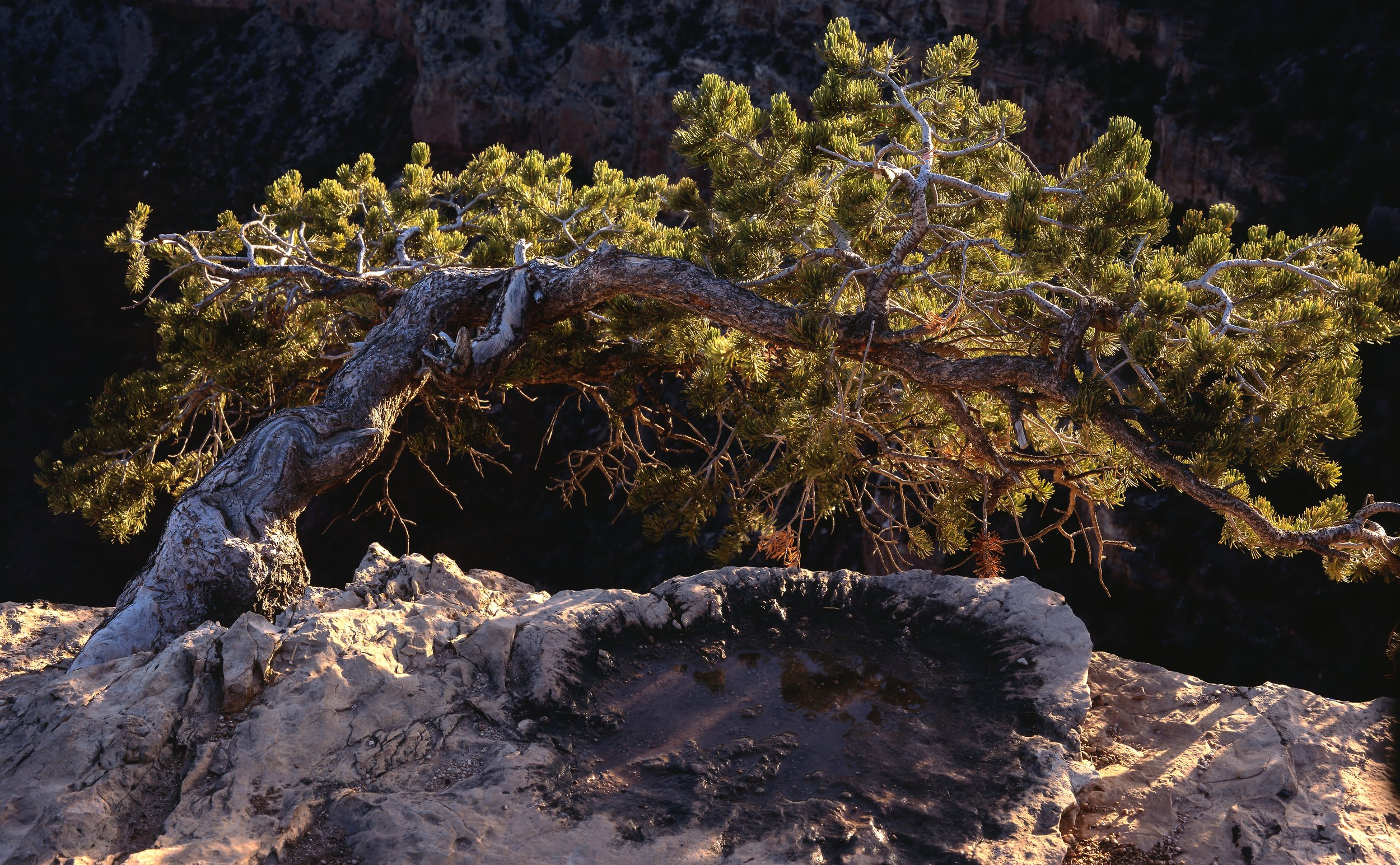 How Trees Talk- Treeline by Patagonia