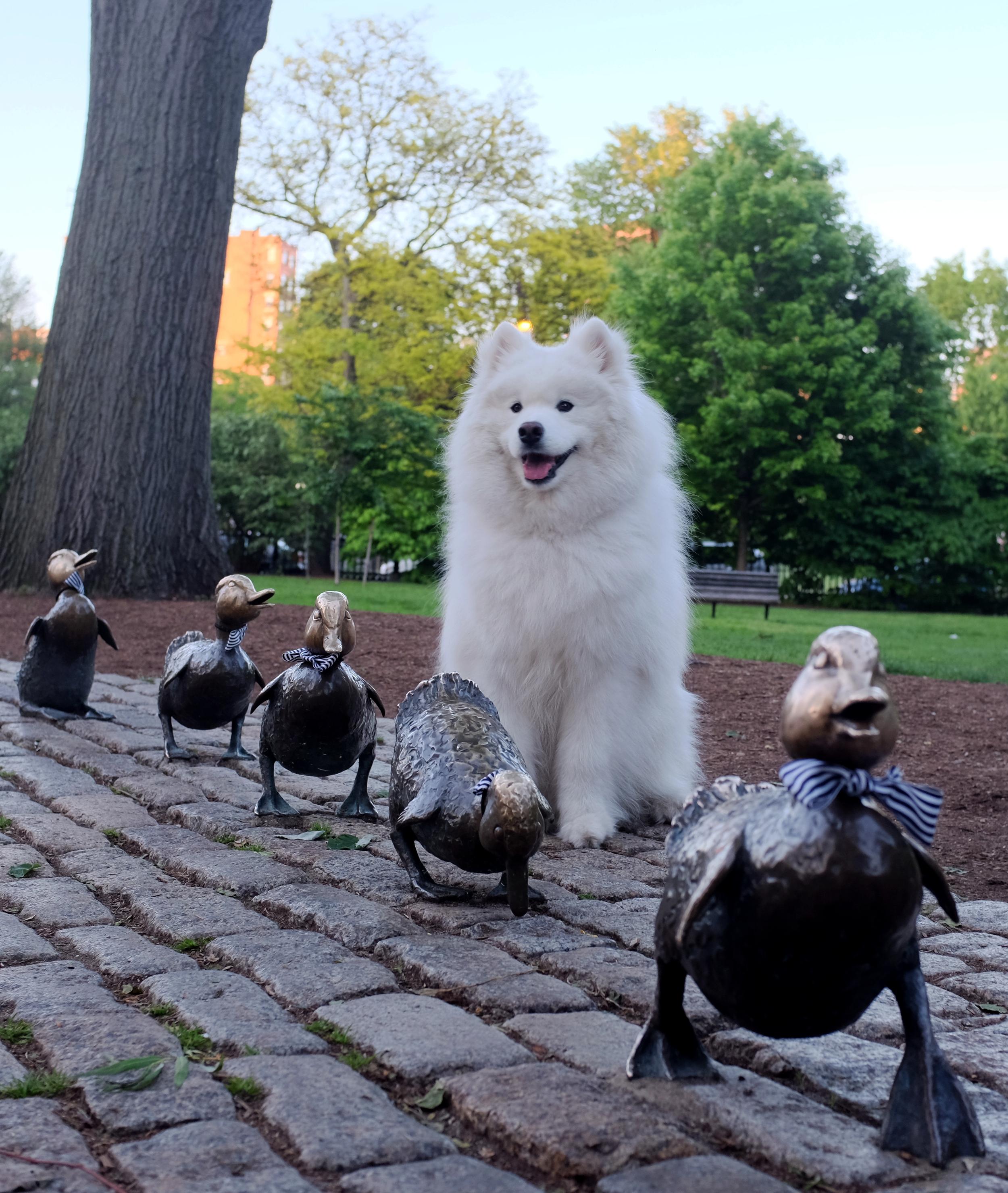 Make Way for Ducklings statue, Boston Public Garden