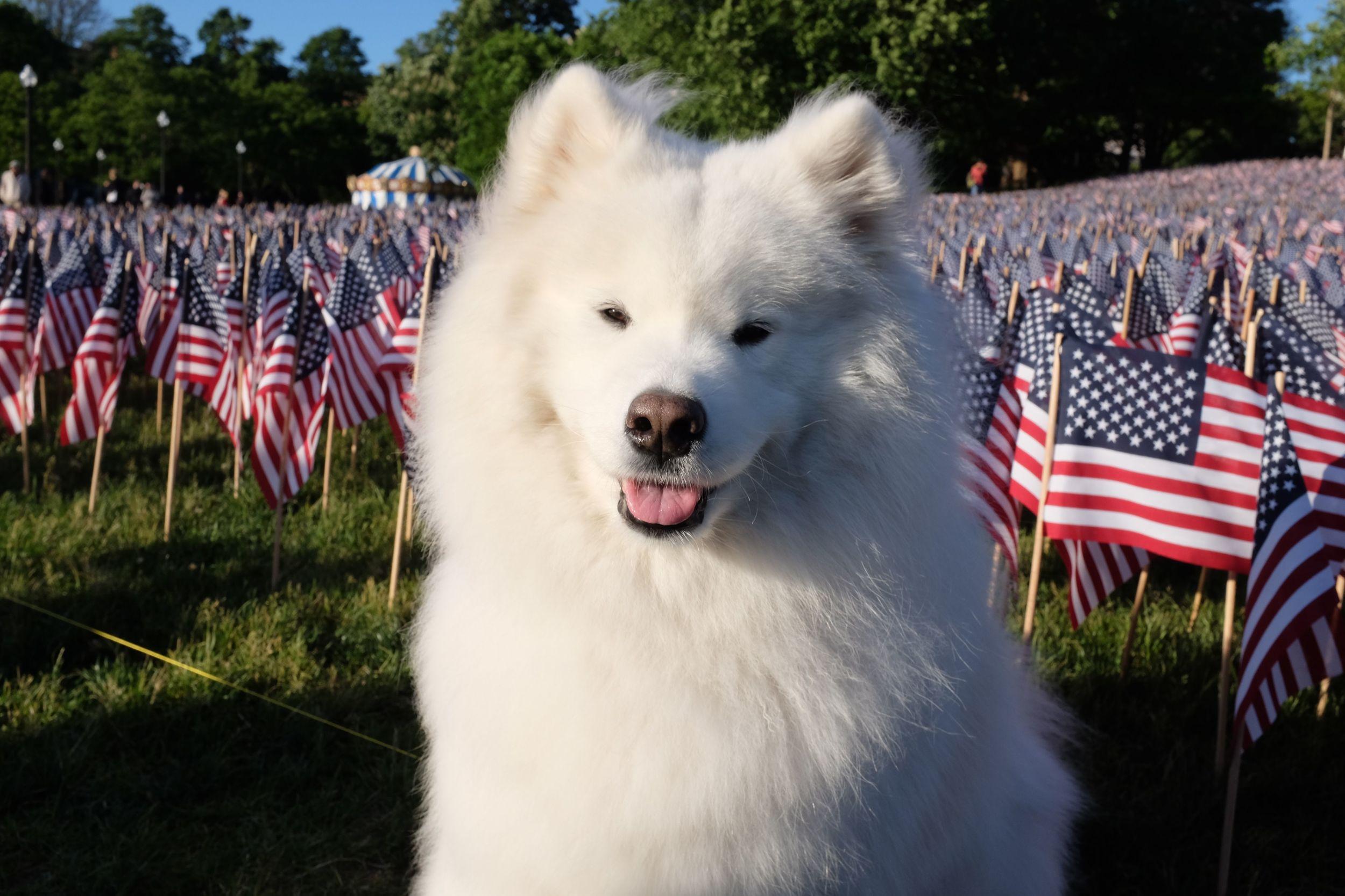 Memorial Day Flags, Boston Common