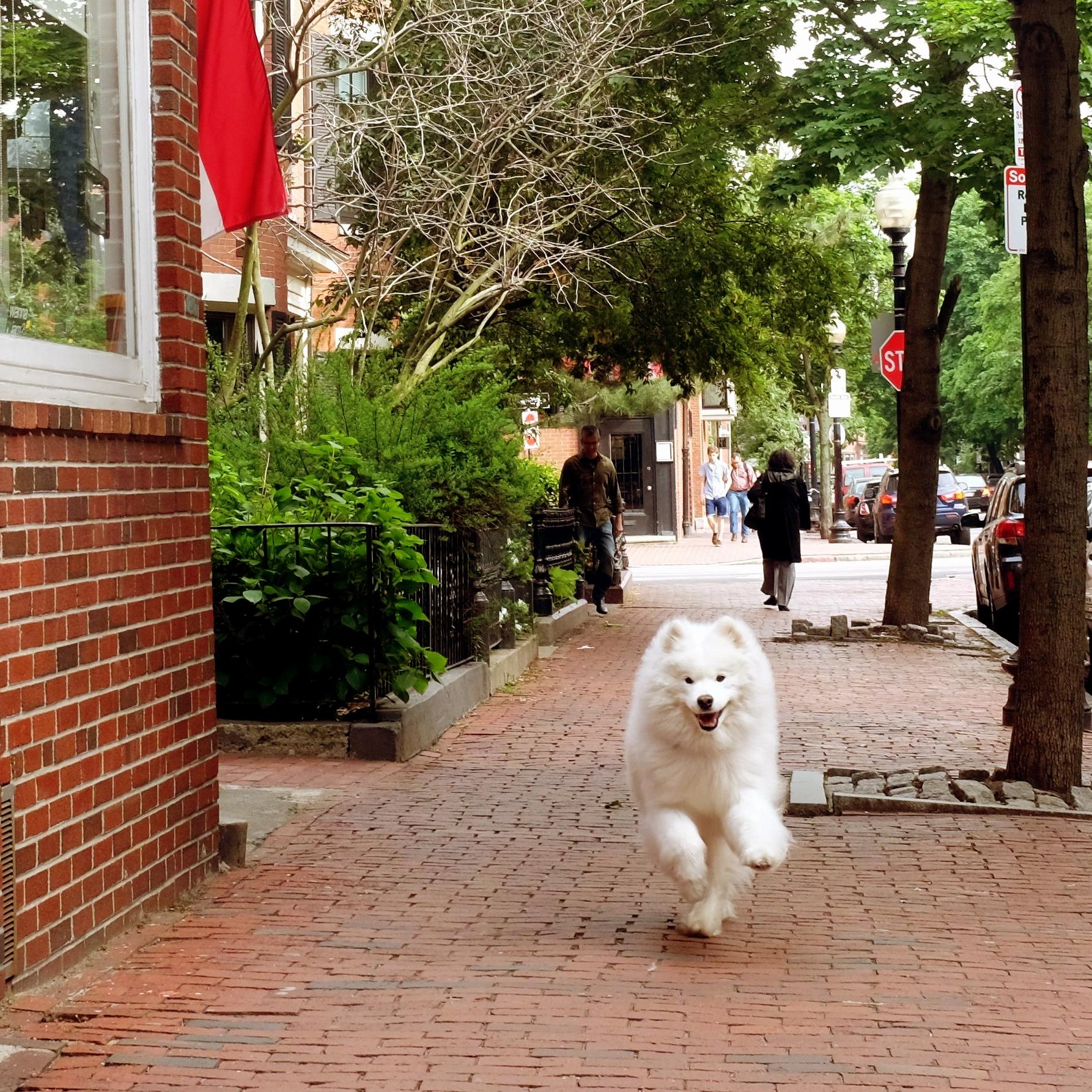 Clarendon Street, Boston