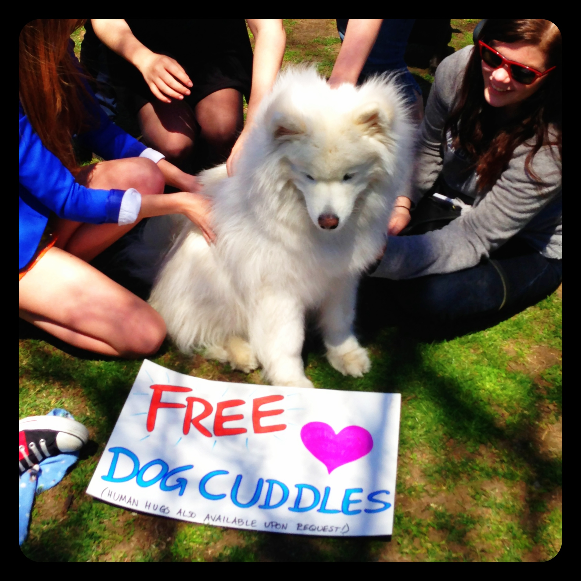 Free Dog Cuddles, Boston Common