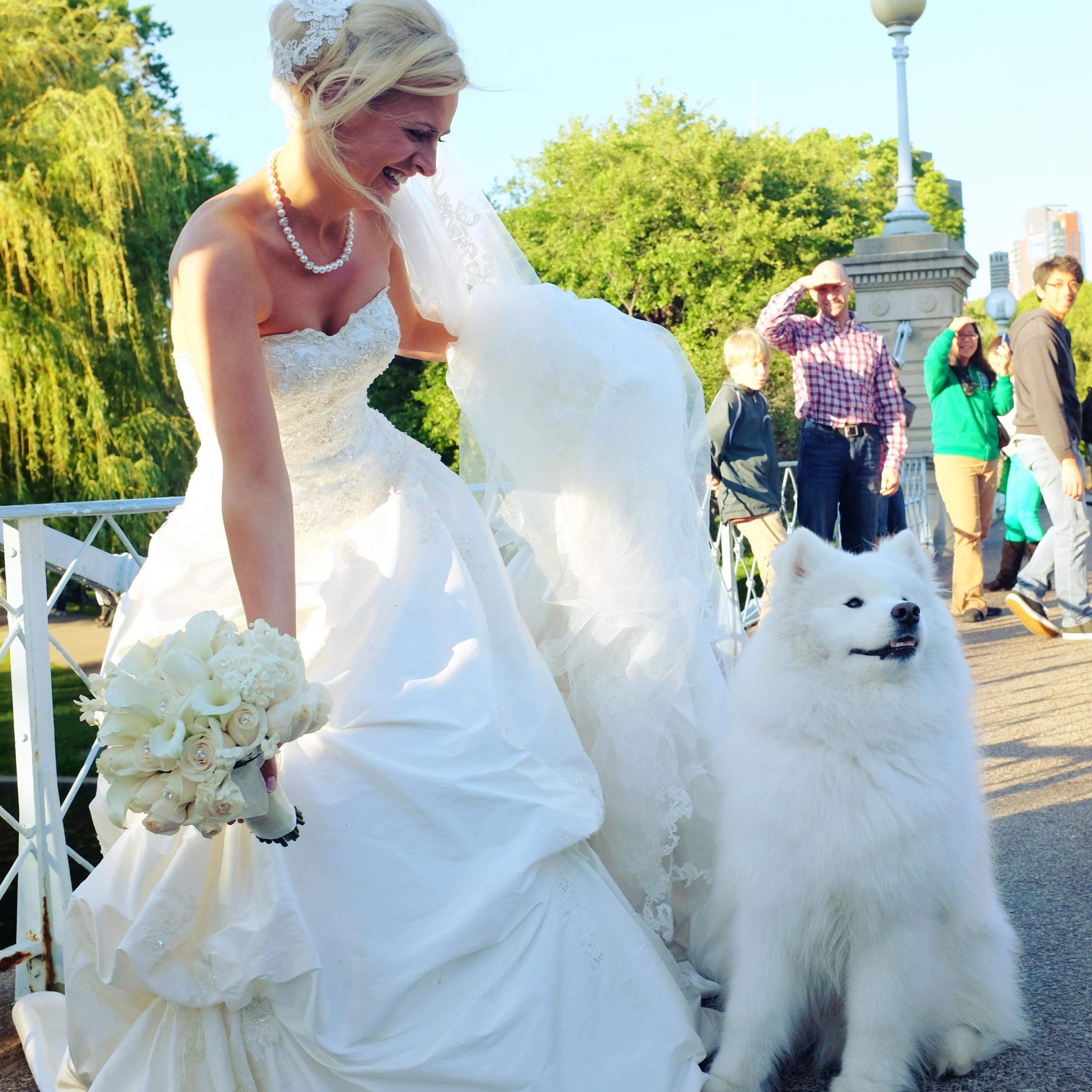 Wedding photos, Boston Public Garden