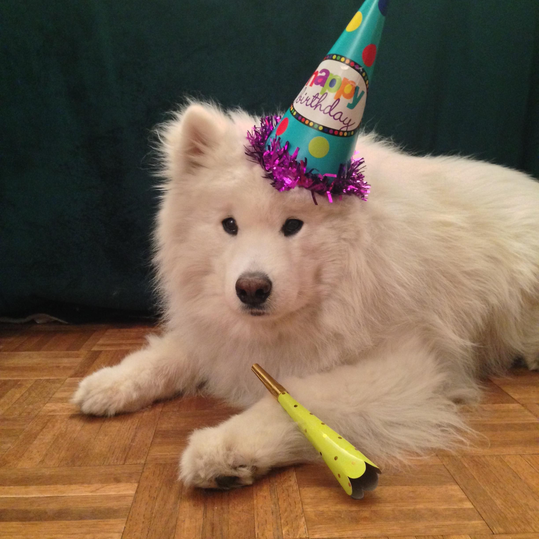Harvard's 10th birthday party