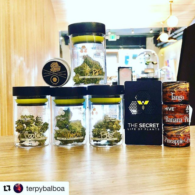 #Repost @terpybalboa with @get_repost ・・・ Sometimes it's hard to get up in the morning, sometimes you have hella headaches, sometimes you can't eat. Sometimes you feel like you have anxiety. What do you do? If your answer is medicine......I hope it's the best A1 out there. When the terps are loud, when the bud is looking good, when the extracts is straight saaaaucy @terp_preservation_society . When the diamond tech 💎 @westcoastalchemy is fucking showing the terps. Daaaamn. @thehiveca @secretlifeca has some straight fiiiiiiiya 🔥 I'm talking like biiiiiig terrrps. Check out their product. This is what motivates me, great A1 product. I think he may even be terp pres currently, 🤔🤔🤔 * * * * * * * * * * * * * * * * * * * * * * * * #fire #desire #passion #thehive #terppres #terplife #terpy #trendsetter #p5s #cannabis #bayareadabbers #710 #terppreservationsociety #westcoastalchemy #topshelf #a1 #sfc #sanfrancisco #totheainawego #terpybalboa