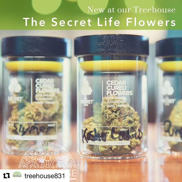 #Repost @treehouse831 with @get_repost ・・・ New at Our Treehouse: Cedar Cured Flower by The Secret Life and The Hive! @secretlifeca curates luxury cannabis and lifestyle brand based in California's Central Coast. Their flower is the 100% organic, ultimate cannabis experience powered by @thehiveca. #santacruz #treehouse #legalizeit #rootedincommunity #legalweed #dispensary #cannabiscommunity #santacruzcommunity