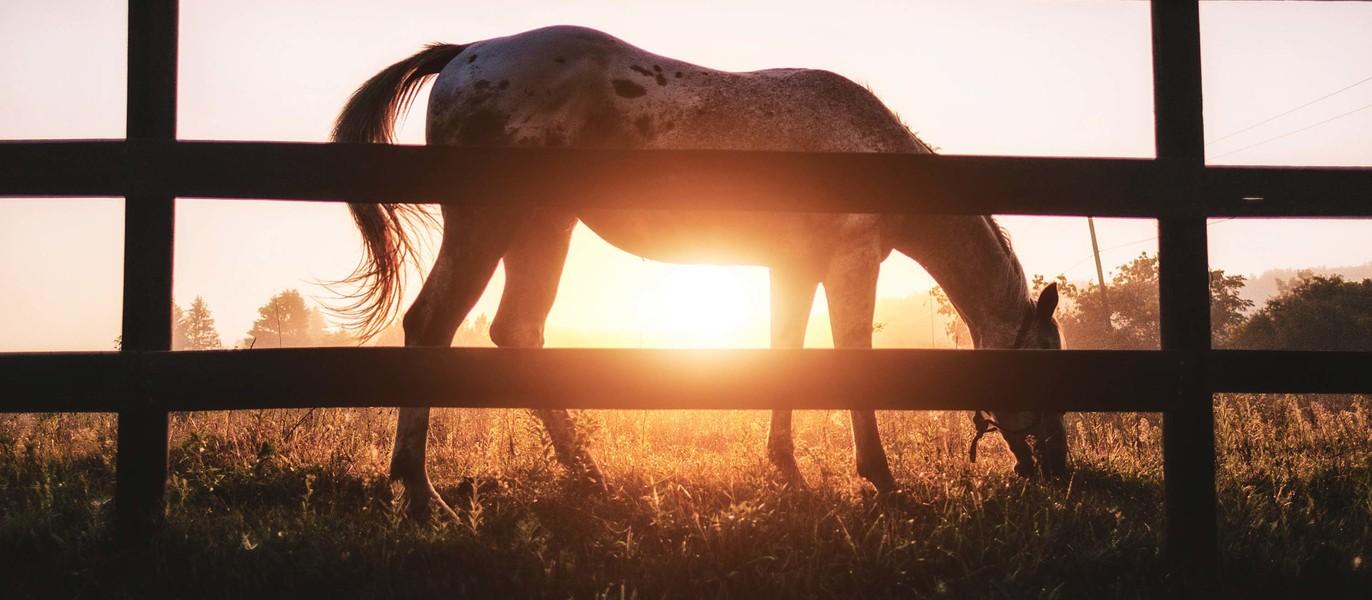 Horses.jpeg