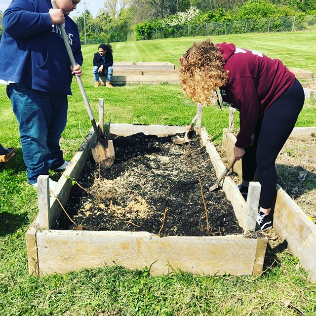 @maplewoodgardenclub filled the beds today and planted raspberries and onions! #growyourownfood #maplewoodgardenproject #maplewoodgardenclub #schoolgardens  #communitygardens #growsomething